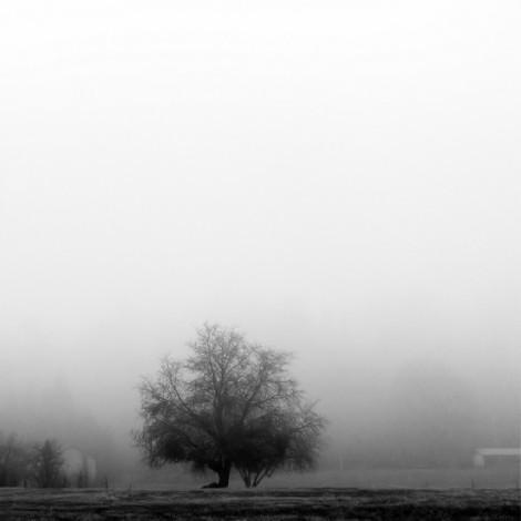 winter-mist_l
